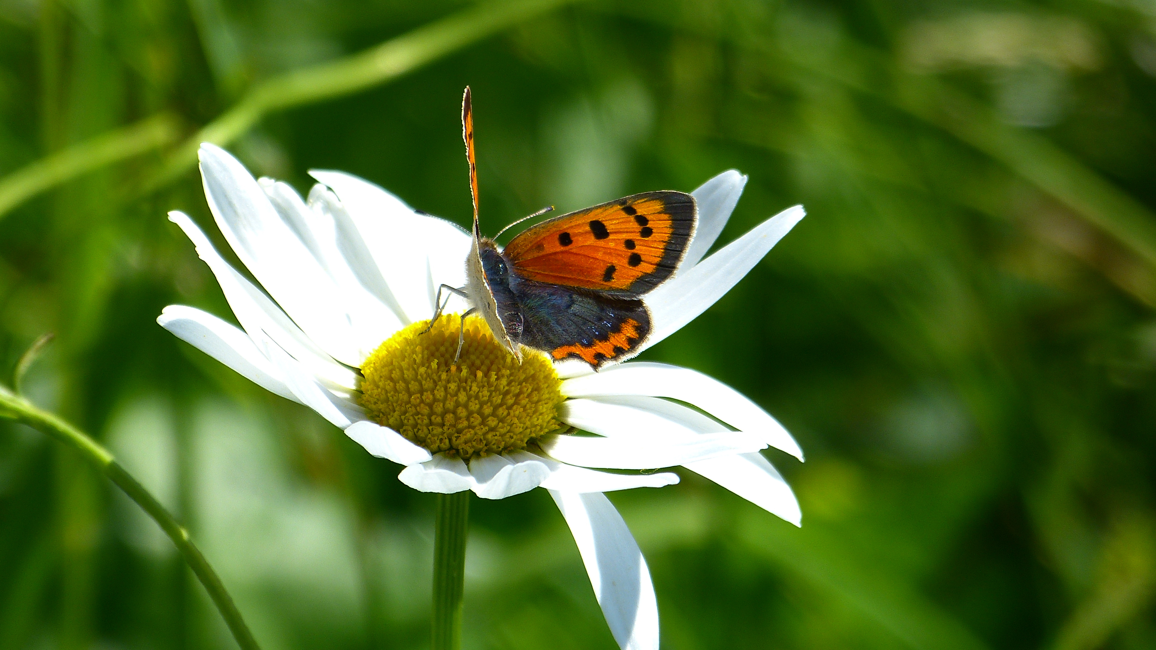 Für Mehr Naturschutz Und Schmetterlinge In Der Stadt