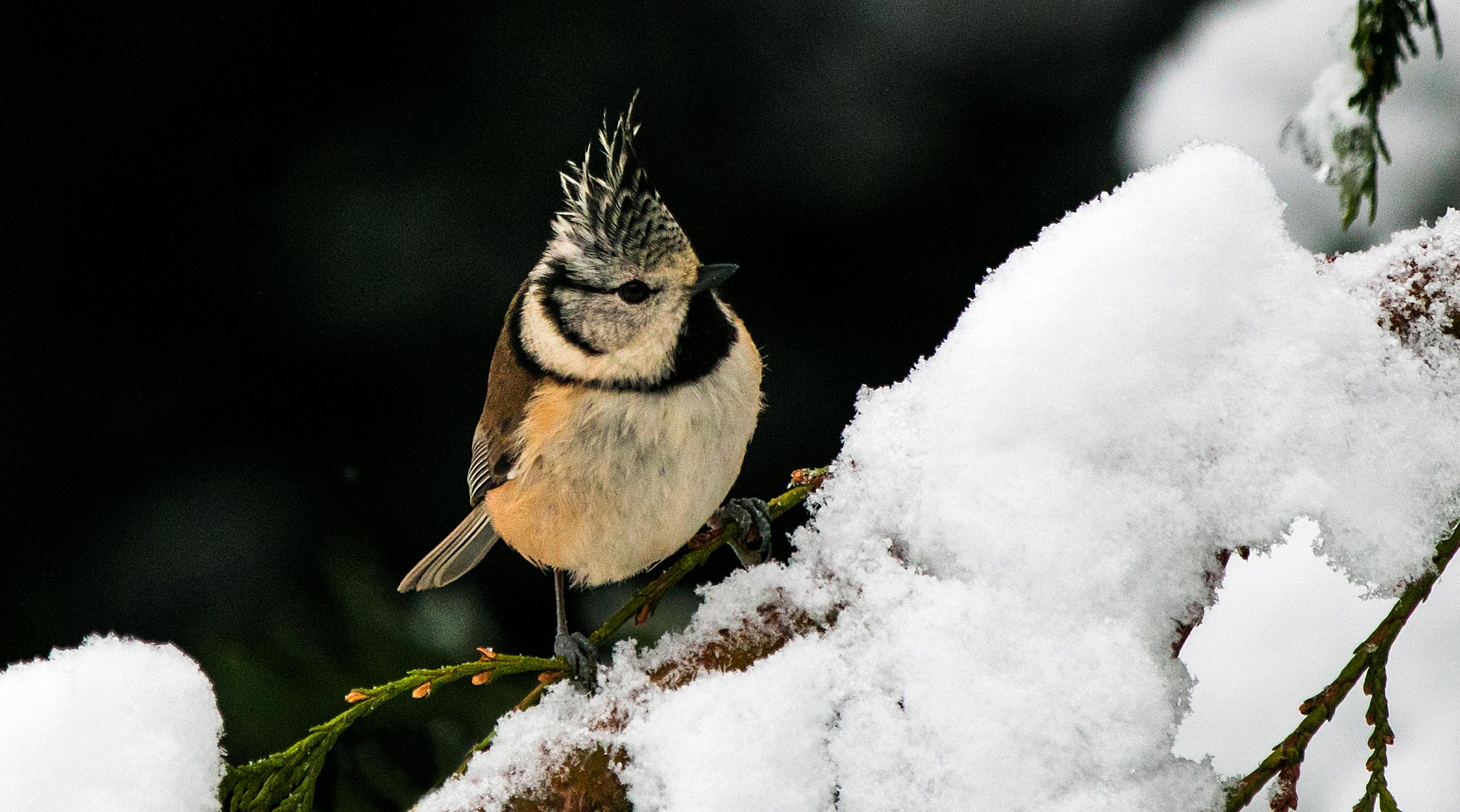 Vogel Futtern Im Winter
